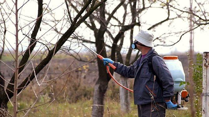 Зимно пръскане с препарати за растителна защита