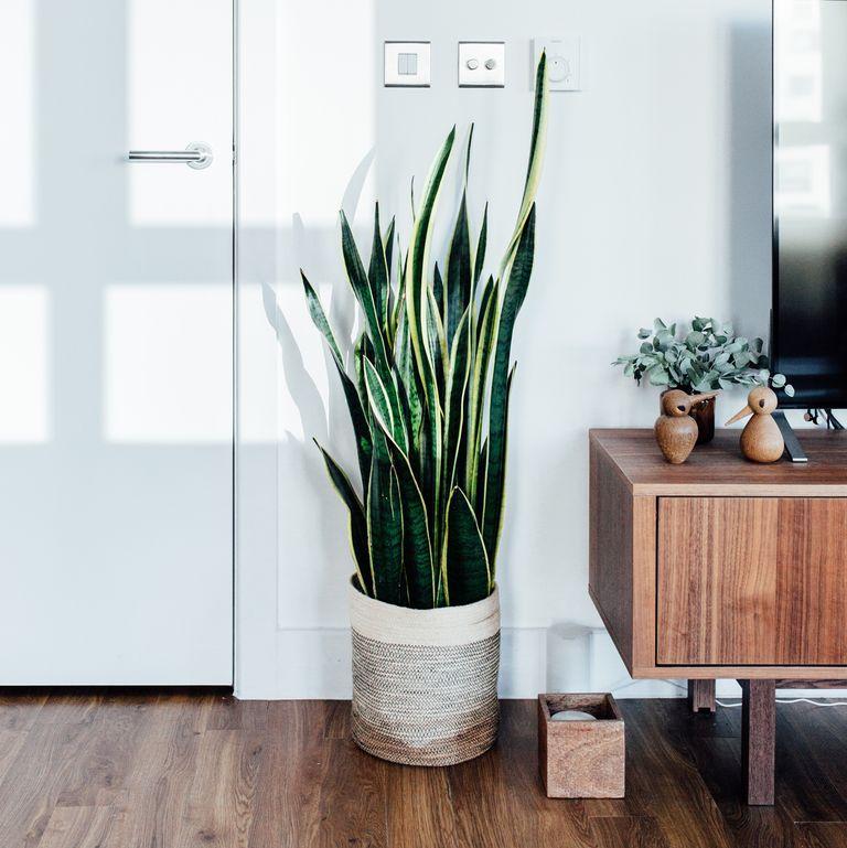 Разнообразно змийско растение