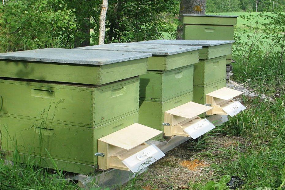 Как да защитим плодовете с помощта на пчелите