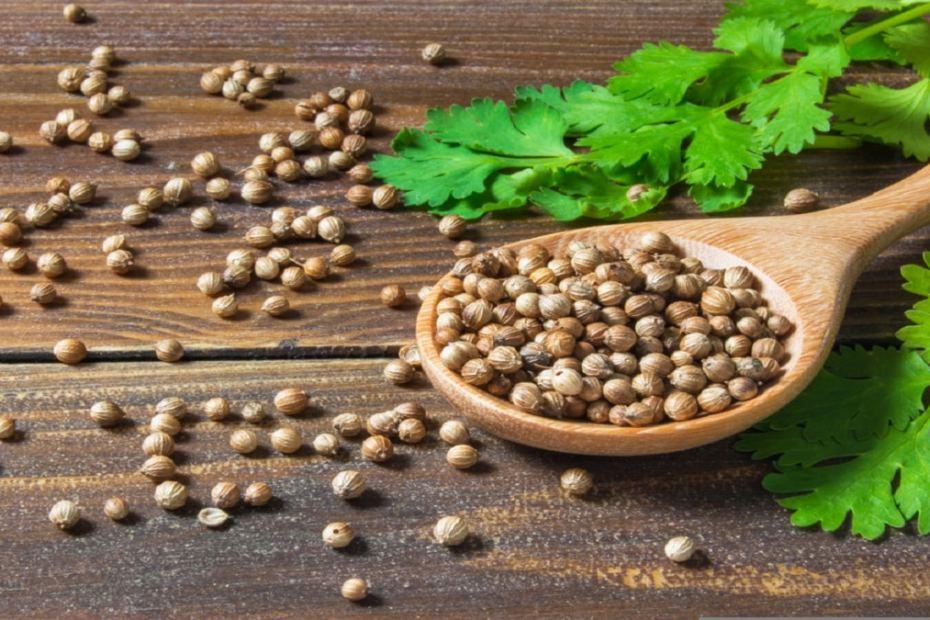 Как да отглеждаме подправки от семена