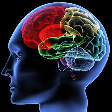 Защо имаме толкова големи мозъци - 10 мистерии на първите хора