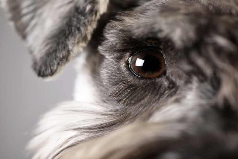 Познайте кучето по муцуната