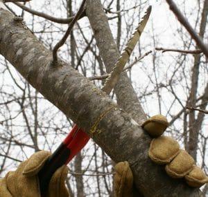 Подрязване на плодни дръвчета - как да подрежем овошките през пролетта