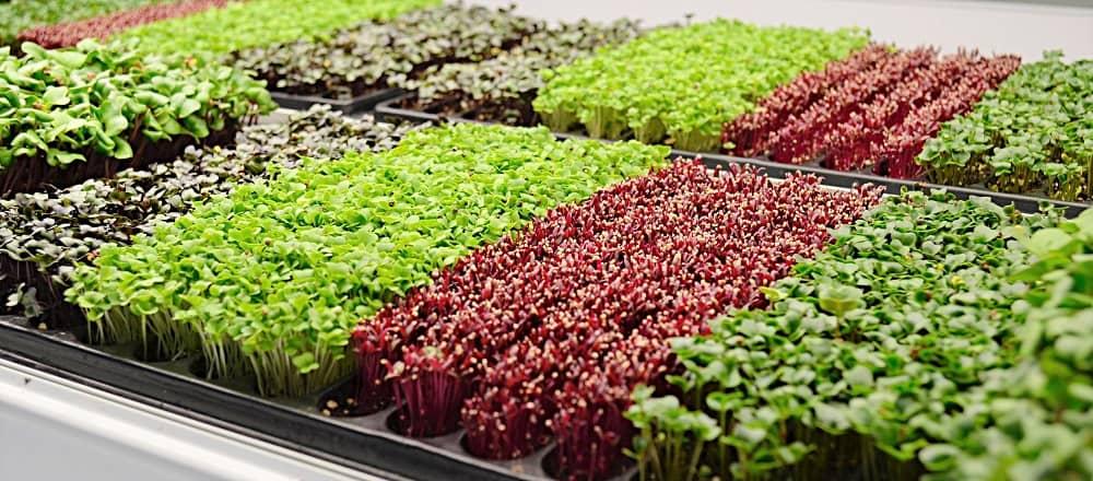Какво представляват микро растенията