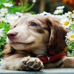 Най-сладките породи кучета като палета