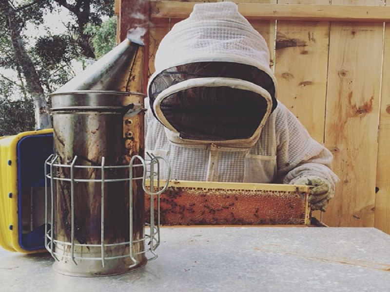 Как да направим естествено гориво за пушалката на пчелите