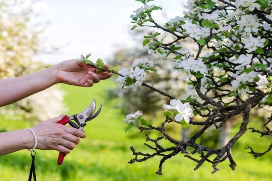 Как да подрежем овошките през пролетта