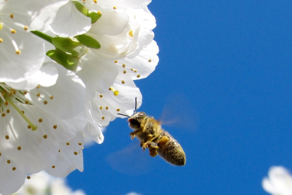 Грижи за пчелите през Март
