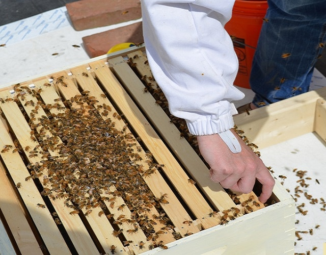 Стесняване и затопляне на пчелните семейства през пролетта - как да се грижим за пчелите през Март
