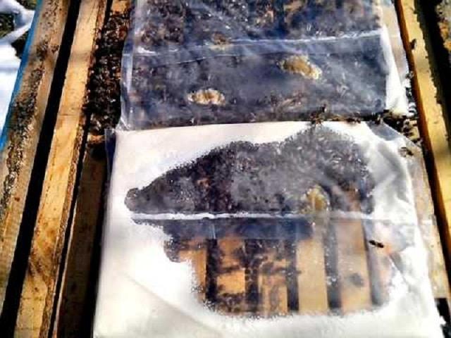 подхранване на пчелите с питка - как да се грижим за пчелите през Март