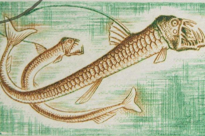 Viperfish (Chauliodus) - най-странните дълбоководни същества