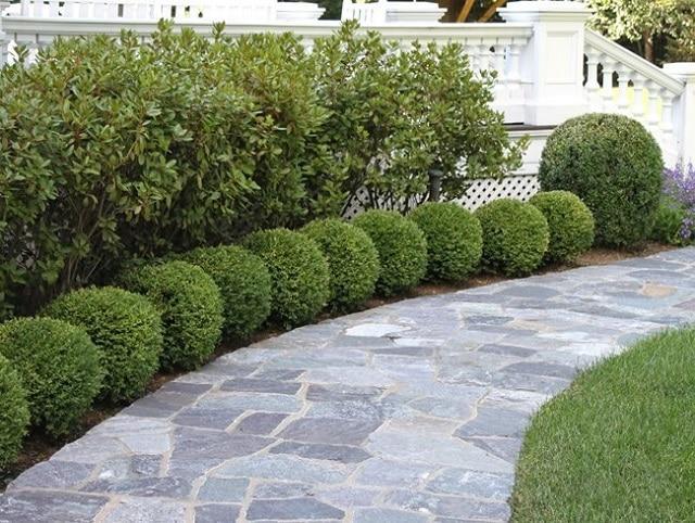 Изберете подходящите растения за предния ред - как да създадем красива градина