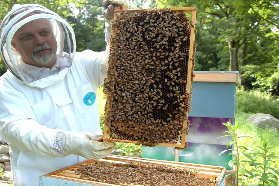 Как да държим пчелните семейства в работно състояние до главната паша