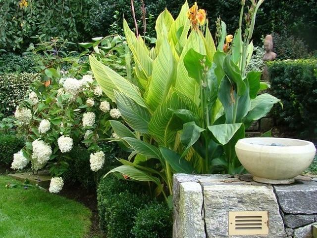 Помислете за форма, линия и цвят в градината - как да създадем красива градина