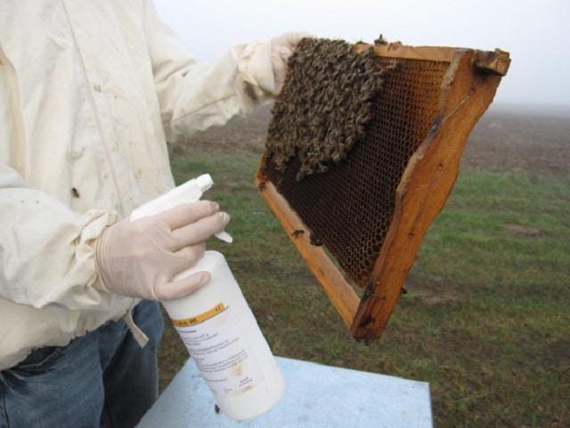 Третиране на пчелите през пролетта с млечна киселина