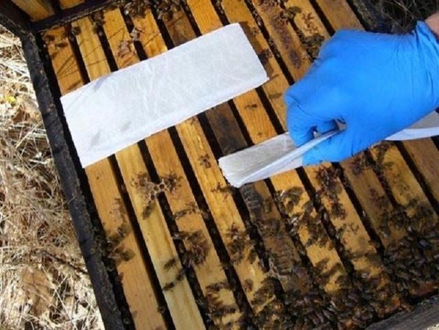 Третиране на пчелите през пролетта с мравчена киселина