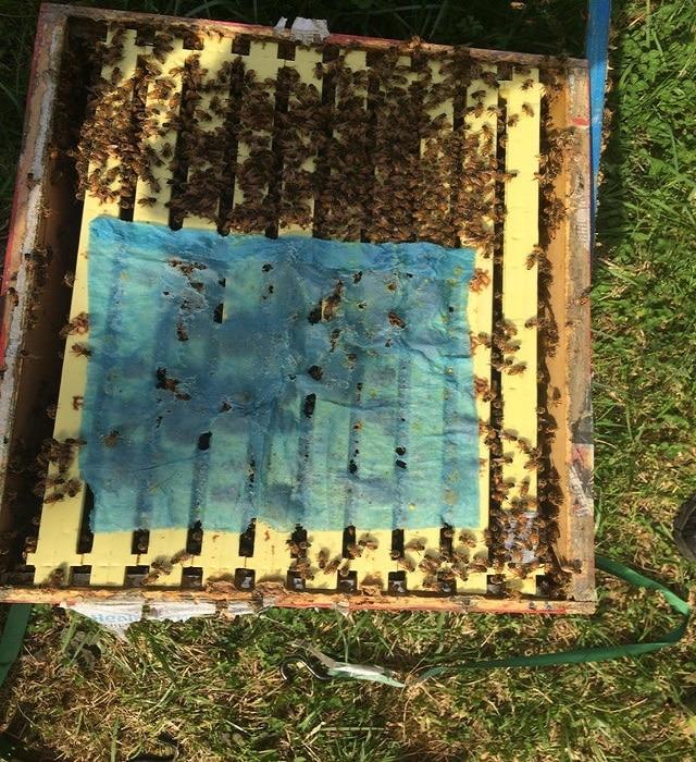 Третиране на пчелите през пролетта с оксалова киселина и глицерин - ленти с удължено действие