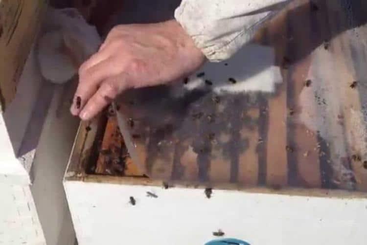 Третиране на пчелите през пролетта с тимол