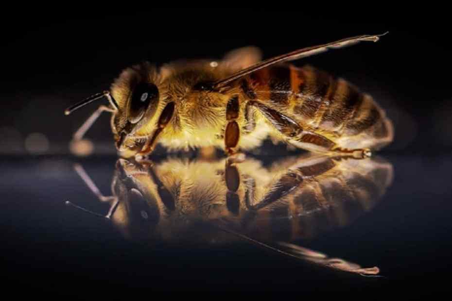 Третиране на пчелите през пролетта