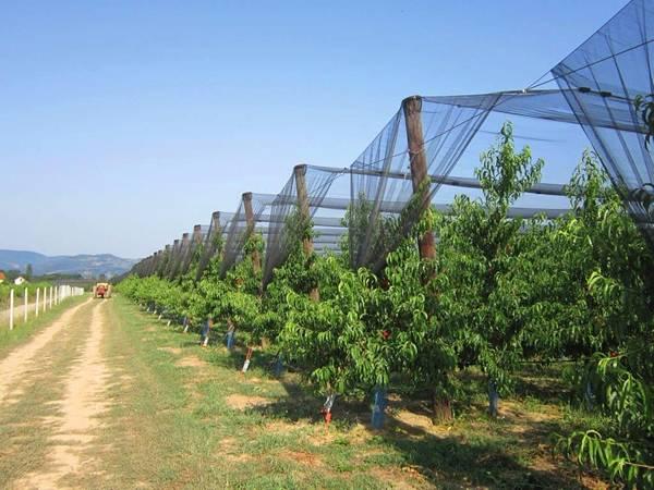 Избор на мрежа против градушки - как да предпазим градината от градушка