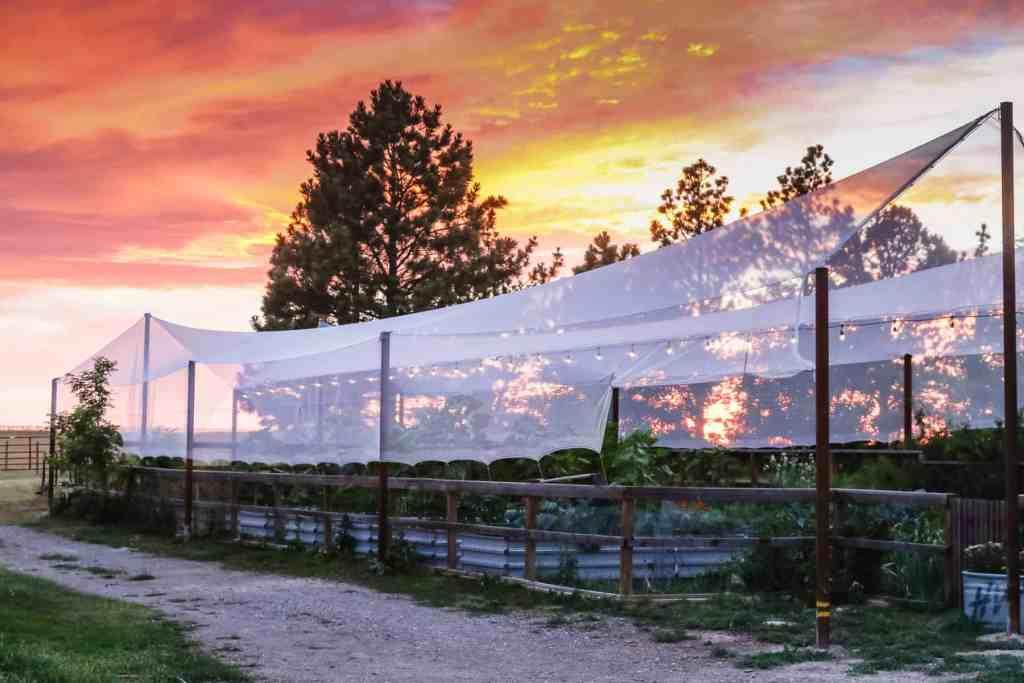 Как да предпазим зеленчуковата и овощната градина от градушка - как да предпазим градината от градушка