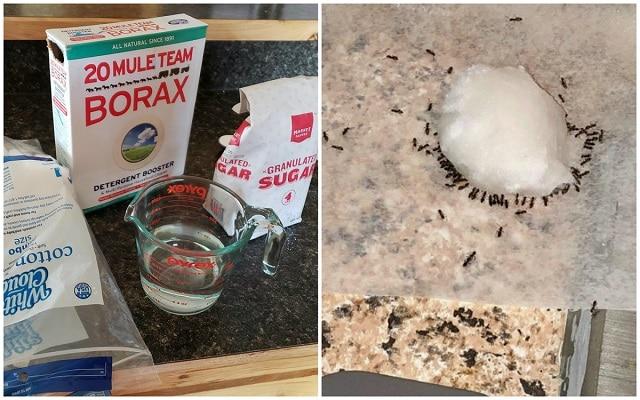 Как сами да си направим домашна стръв за мравки