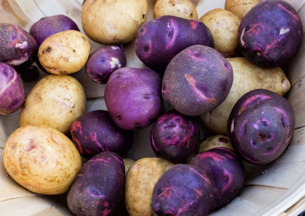 Кратка история на картофа