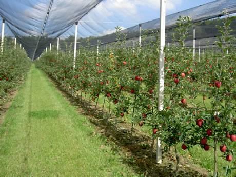 Монтиране на мрежа против градушка - как да предпазим градината от градушка