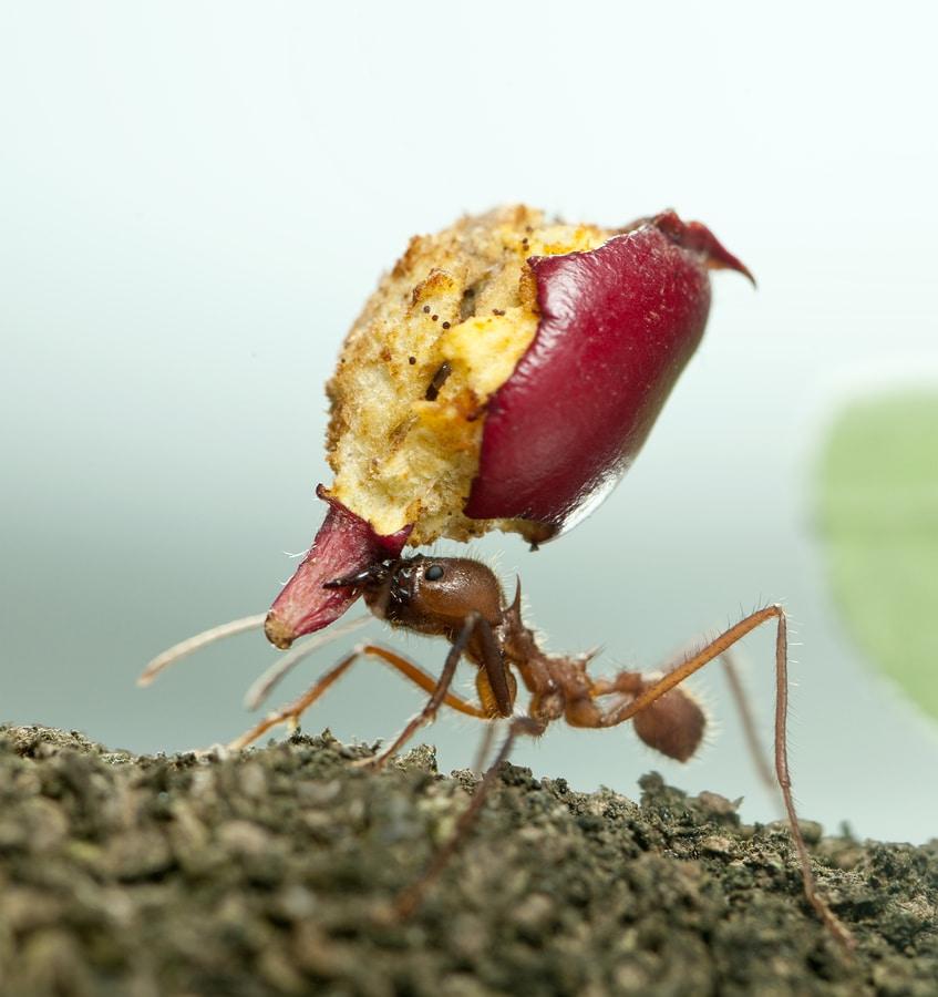 любопитни факти за мравките