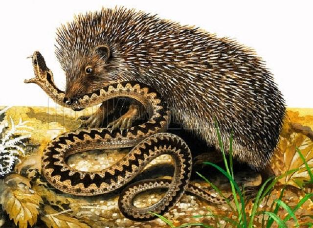 Използвайте естествени неприятели и натурални продукти срещу змиите - как да се предпазим от змиите
