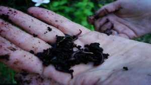 Как да изградим ферма за червеи в домашни условия