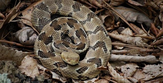 Кога се появяват змиите в природата?