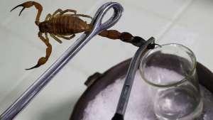 Отрова от смъртоносен ловуващ скорпион