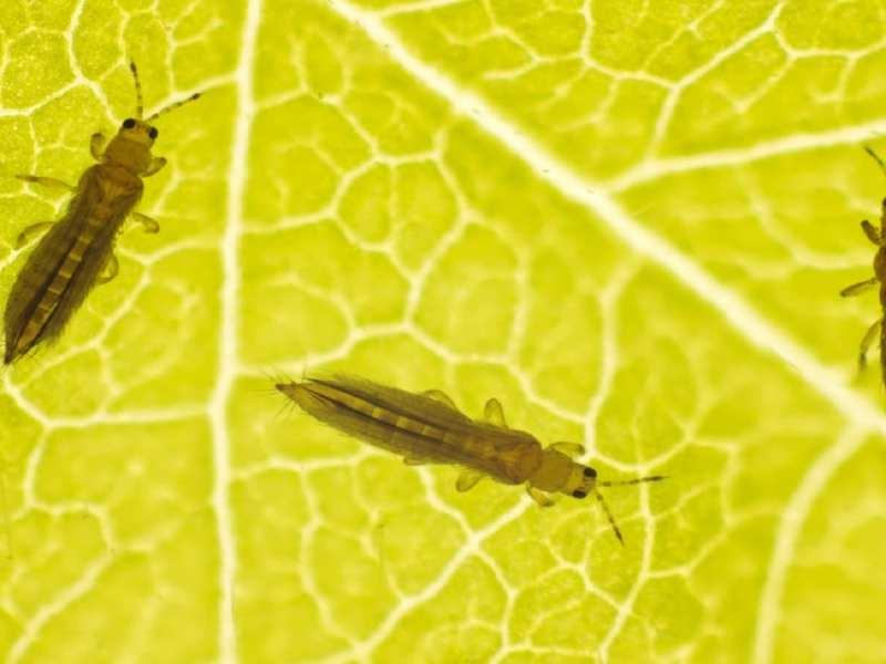 Най-често срещаните вредители на стайните растения - как да се отървем