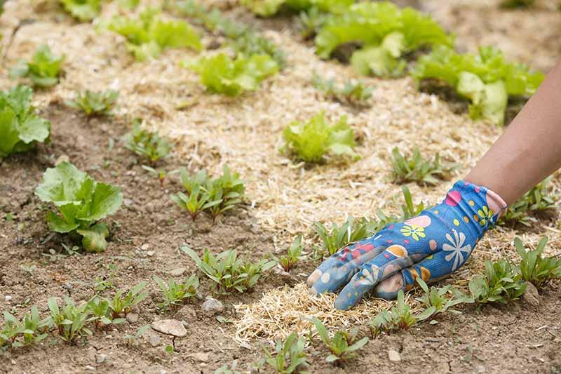 Обогатяване и подхранване на нашата почвата