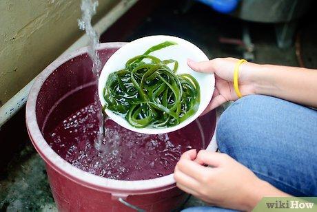 Течна тор от водорасли