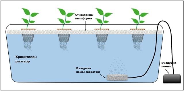 Хранителна-хидропонна-система-в-дълбока-вода