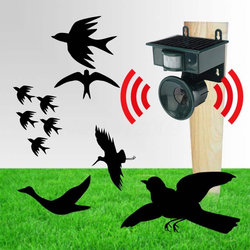 Как да защитим градината и овошките от птици с устройство за отблъскване на птици