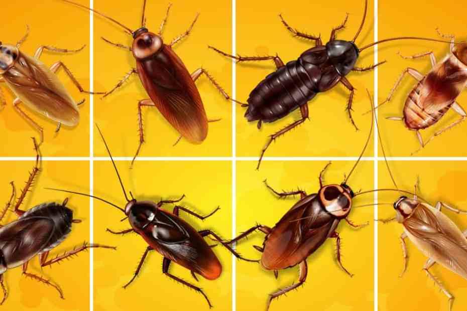 Как да се отървем от хлебарките вкъщи - полезни съвети