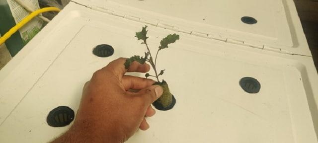 как да направим собствена хидропонна оранжерия