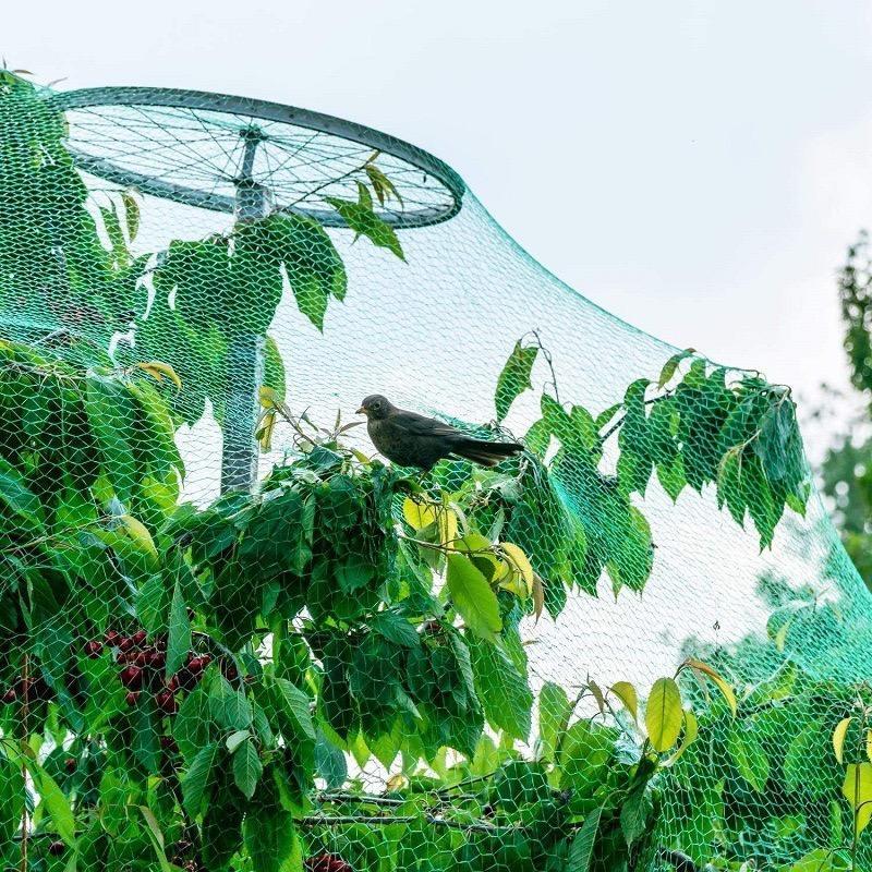Покрийте овощните дървета и храсти с мрежа за птици