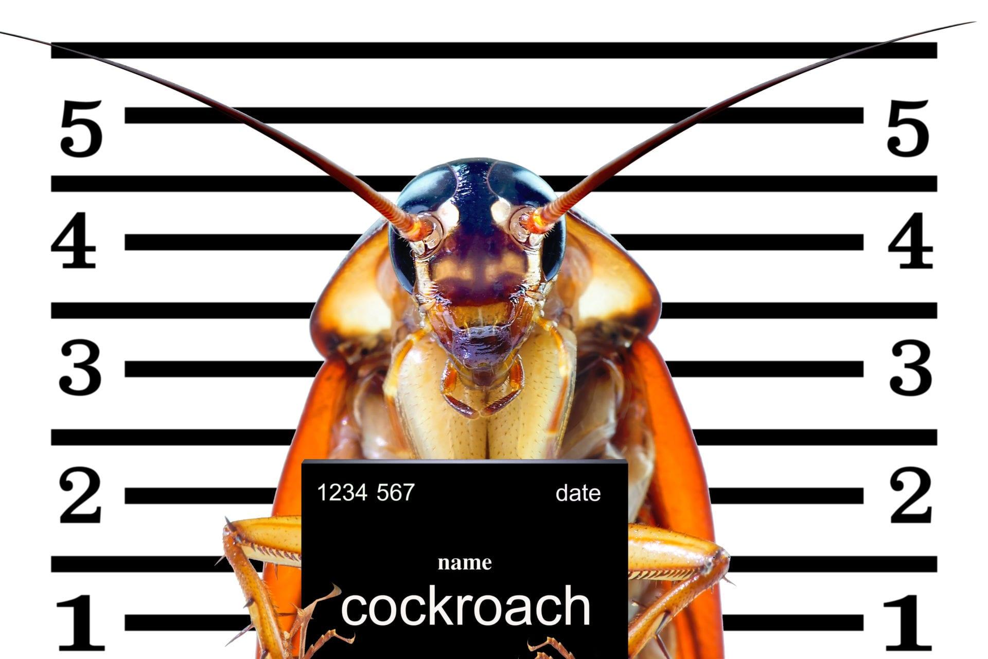 Полезни съвети за превенция от хлебарки - как да се отървем от хлебарките