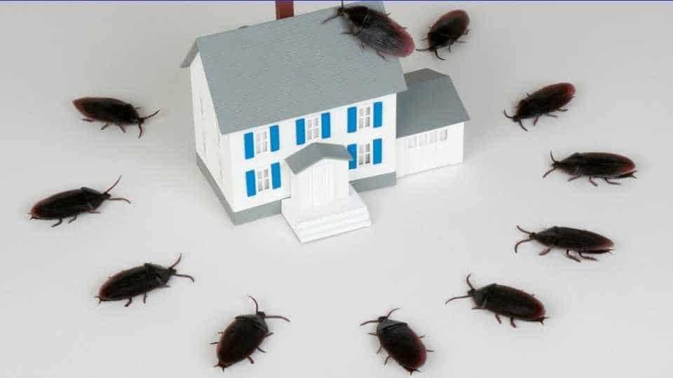Как хлебарките влизат в дома ни - как да се отървем от хлебарките
