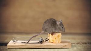 Как да се отървем от мишките и плъховете - начини и полезни съвети